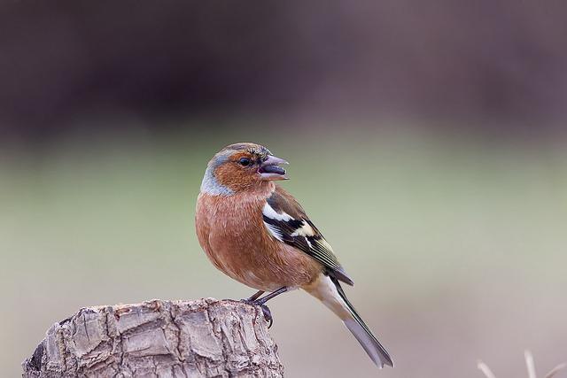 Imagem de pássaro