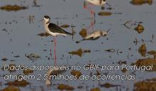 Registos para Portugal atingem 2,5 milhões
